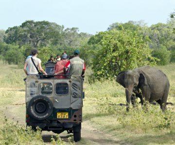 Réserves et safaris